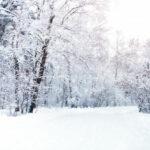 prévention hivernale : système immunitaire