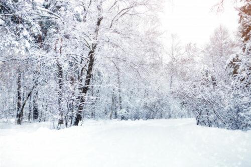 Prévention hivernale article